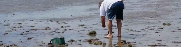 peche a pied normandie